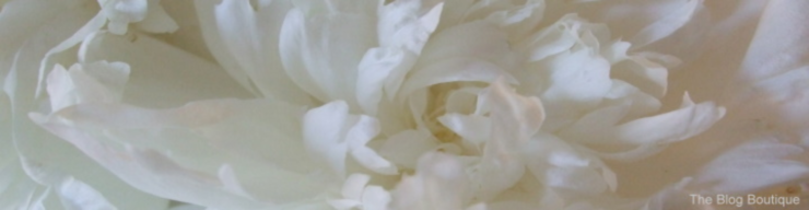 Free header art - a simple white peony