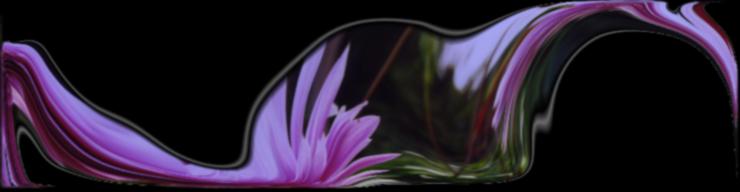 Dahlias lovingly swirled