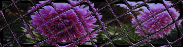 Dahlias with reflective tile added