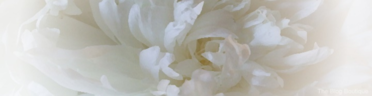 White peony, lightly watercolored with edges blurred
